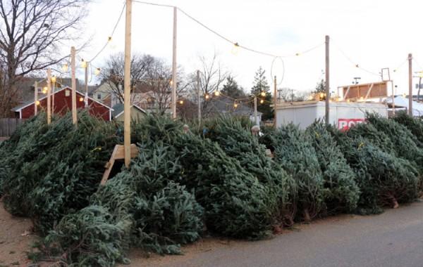 В этом году новогодние елки могут стоит дешевле